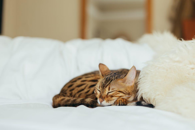 Sommeil : mes astuces pour mieux dormir